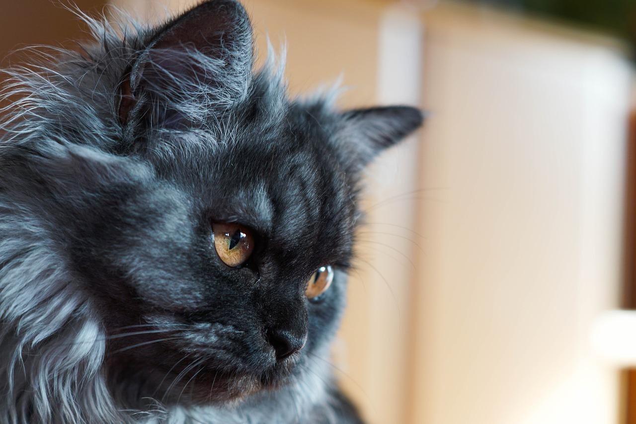 mon-chat-kirou